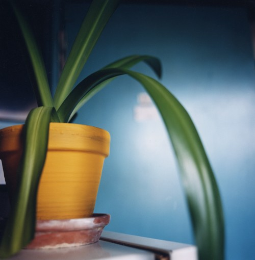 http://www.kristofguez.com/files/gimgs/th-36_36_plante-verte.jpg
